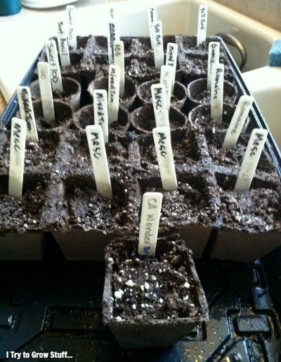 Seed starting in peat pots