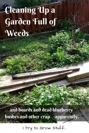 garden full of weeds and boards