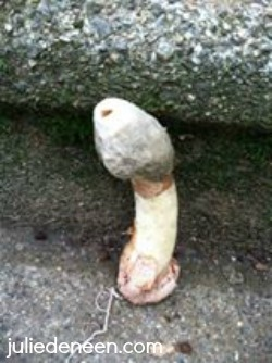 julie fungus