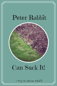 Peter Rabbit Suck it