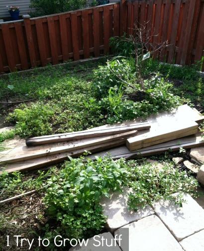 weedy garden mess