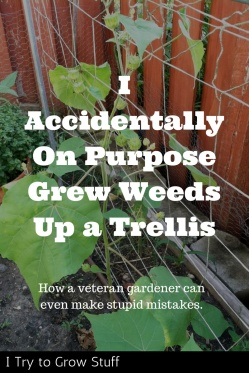 Grew Weeds up trellis