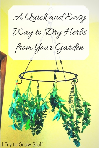 quick and easy way to dehydrate herbs